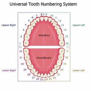 Universal Tooth Numbering System