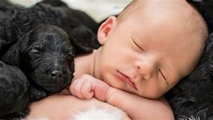 Newborn sleeps surrounded by puppies in these adorable ...