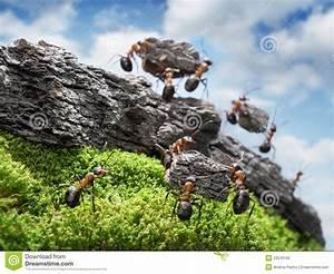 Ameisen In Der Wand : team der ameisen die wand teamwork konzept costructing sind stockbild bild von idee felsen ~ Frokenaadalensverden.com Haus und Dekorationen