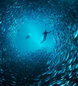 Under Water Beauty ~ A Huge Collection of Images