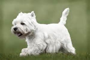 dog breeds that don t shed choose your preferred breed