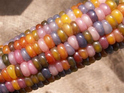 gem corn the story behind glass gem corn business insider