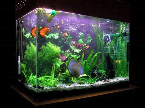 fish aquariums fish tanks plants