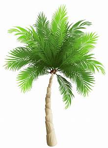Palm Tree PNG Clipart Image | SANDRO | Pinterest | Clipart ...