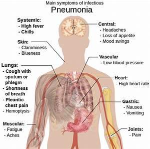 File Symptoms Of Pneumonia Svg