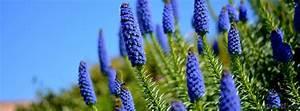 Beautiful Blue Flower Facebook Cover