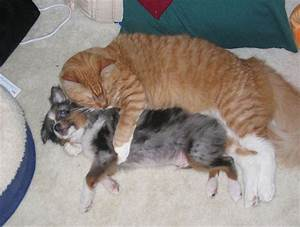 Funny Pictures Of Cats And Dogs Together