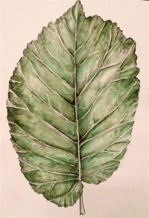 observational drawing   leaf  pencil