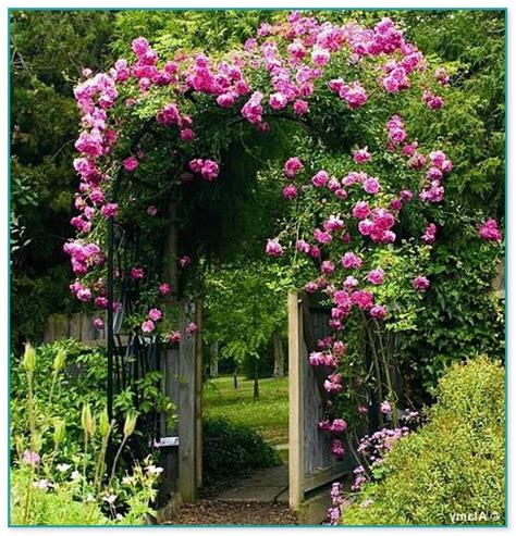 Best Climbing Flowering Plants Pictures