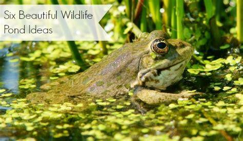 wildlife pond ideas  beautiful examples moral