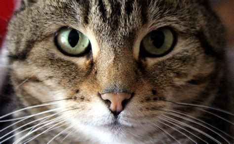 View, Pet, Portrait, Fauna, Close Up, Nose