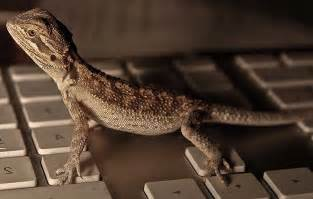 photoperiod for bearded dragons bearded dragon care