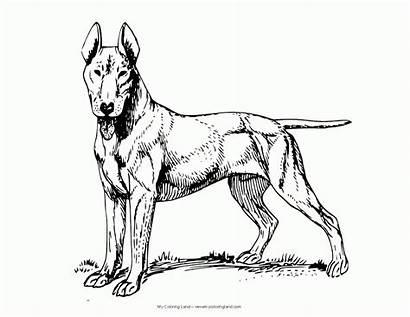 Coloring Dog Shepherd German Popular