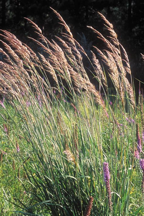 types of grass in india wildlife animals indiana images