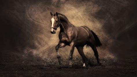 horse majestic photofuniaa