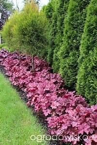 ogrodowisko garden pinterest jardins amenagement et With idee amenagement jardin paysager 16 massifs de roses mon jardin reve