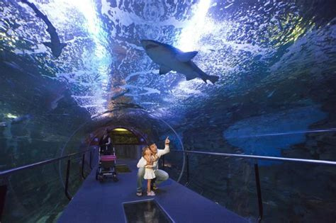 aquarium donostia san sebasti 193 n museums donostia san sebasti 225 n san sebastian tourism