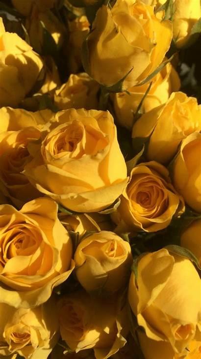 Aesthetic Sunflower Wallpapers Yellow Sunflowers
