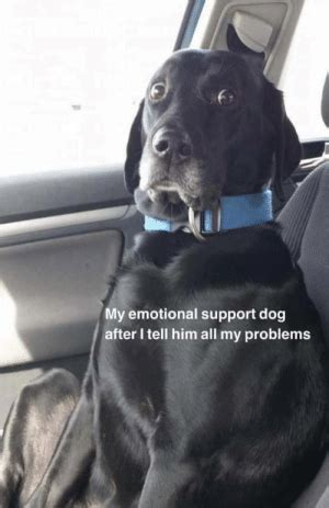 emotional support dog       problems