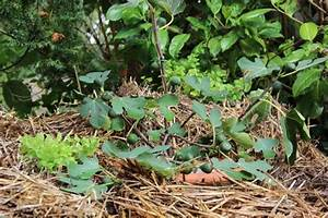 Feigenbaum Im Garten : altes stroh aus den strohballen im garten jetzt sinnvoll verwenden ~ Orissabook.com Haus und Dekorationen
