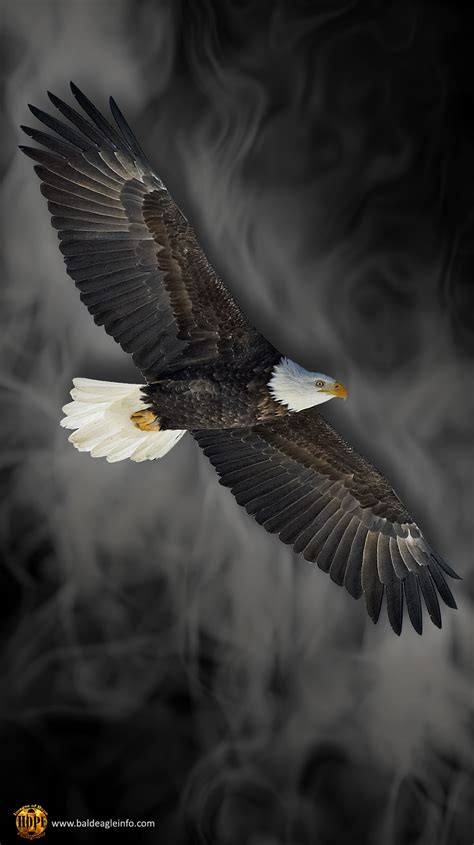Animal Wallpaper For Android - eagle wallpaper for android animals hd wallpaper