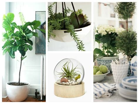 25+ Best Ideas About Small Potted Plants On Pinterest