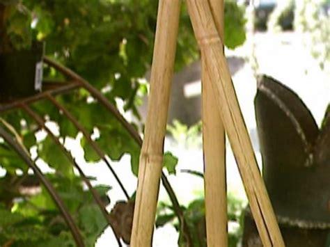 bamboo trellis video diy