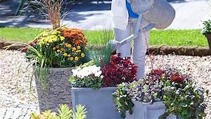 Blumenkübel Bepflanzen Sommer : stauden in k bel pflanzen oase auf balkon und terrasse ~ Eleganceandgraceweddings.com Haus und Dekorationen