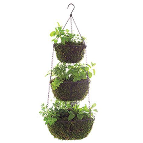 hanging herb garden garden club