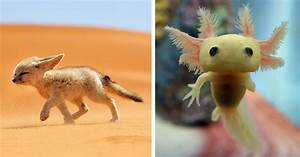 14 Rare Baby Animals That You Might Have Not Seen Before ...