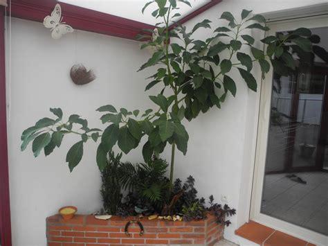 plantes de bureau sans soleil cheap luhibiscus nuest pas