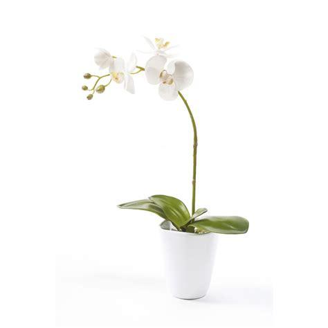 entretien orchidee en pot 28 images orchid 233 e phalaenopsis 2 branches cascade en pot de