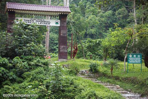 taman nasional gunung leuser kekayaan hutan tropis
