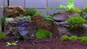 Pflanzen Für Terrarium : ein ewiges oder zeitweise terrarium f r pflanzen teil 3 neue pflanzen youtube ~ Orissabook.com Haus und Dekorationen