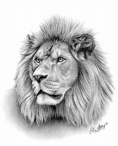 'Majesty - Lion' wildlife portrait pastel pencil drawing ...