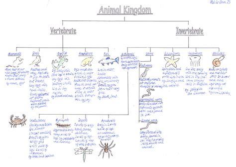 animal worksheet: NEW 546 ANIMAL CLASSIFICATION WORKSHEET