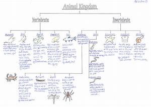 Classification Of Animals Vertebrates And Invertebrates ...