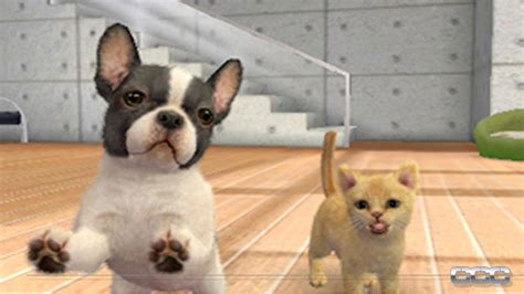 nintendogs cats preview  nintendo ds cheat code central