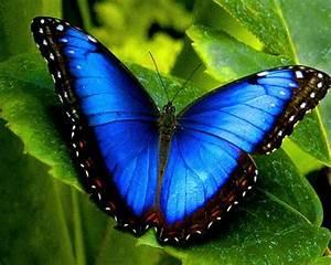 Bedeutung Schmetterling In Der Wohnung : schmetterling bedeutung und symbole deko feiern tattoos zenideen ~ Watch28wear.com Haus und Dekorationen