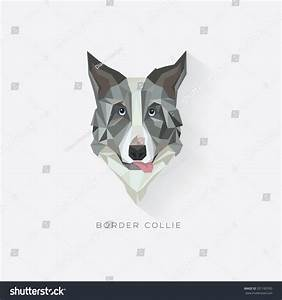 Border Collie Dog Breed Vector Illustration Stock Vector ...