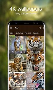 Amazon.com: Tiger Wallpapers 4K & HD Backgrounds apps ...