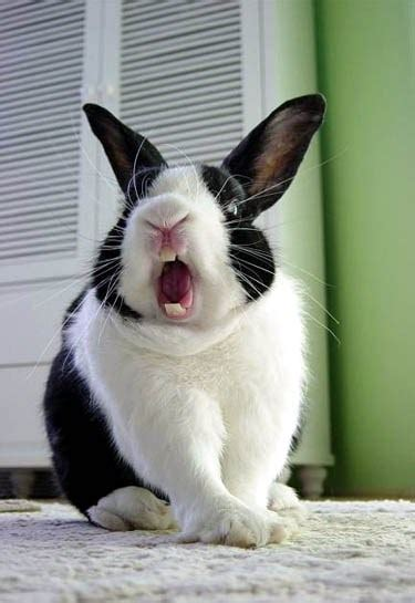 funniest rabbit face pictures    time