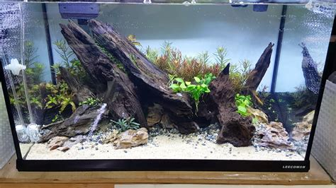 Aquascape Wood by Aquascape 60cm Layout With Mangrove Wood
