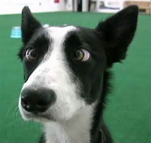 Friday Funny: The Cross-eyed Cow Dog » Newsletters