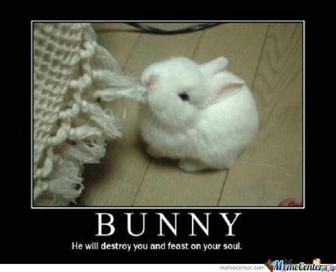 Chocolate Bunny Meme - bunny memes pictures to pin on pinterest thepinsta
