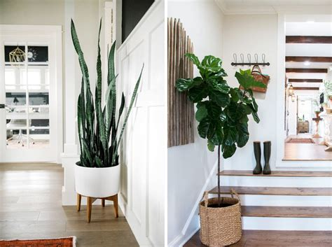 Our Favourite Indoor Plants