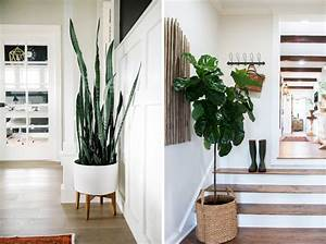 Our, Favourite, Indoor, Plants