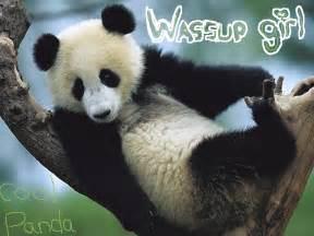Wassup Girl? | pandacuddles