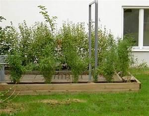 Garten Sichtschutz Bambus : bambus im garten faszinierend und vielseitig einsetzbar ~ A.2002-acura-tl-radio.info Haus und Dekorationen