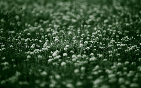 flower images tumblr   pixelstalknet